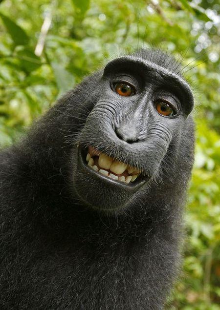 Majmuni i vjedh aparatin fotografik turistit. I ben fotografi vetes.
