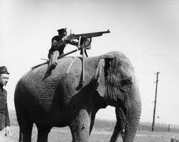 Elefant ne lufte
