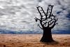 nje peme nga pylli demokracise